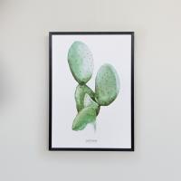 affiche-cactaceae
